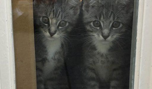 twee kittens van sprookje naar nachtmerrie