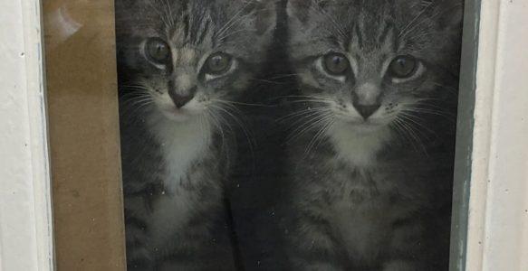 Twee kittens – van sprookje naar nachtmerrie